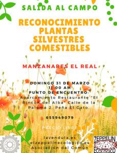 Reconocimiento de plantas silvestres, curso en Madrid